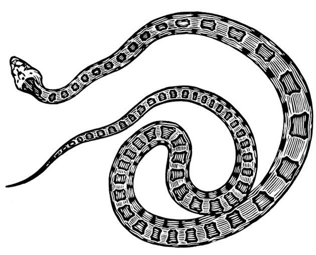 gopher snake thumb.jpg
