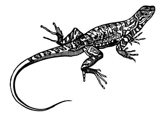 side blotched lizard thumb.jpg