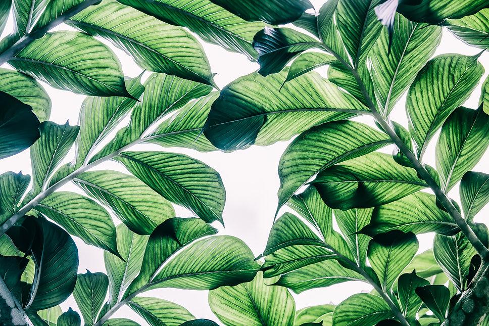 Green Oasis.jpg