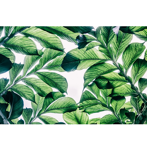 5 x Paper Placemats Green Oasis Gloss 30pk