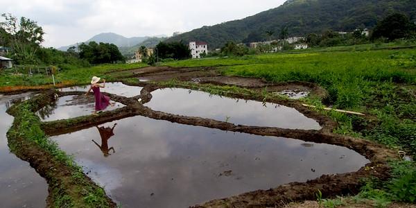 hofan fields.jpg
