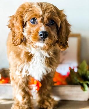 Meet Roo, she's the cutest little additi