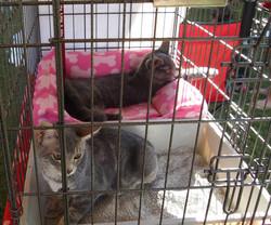 HART kitties