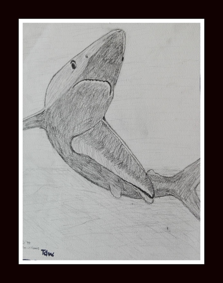 Shark by Thomas D. Williams