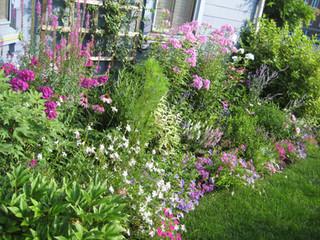cottage garden 3.JPG