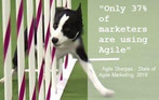 Agility in Marketing