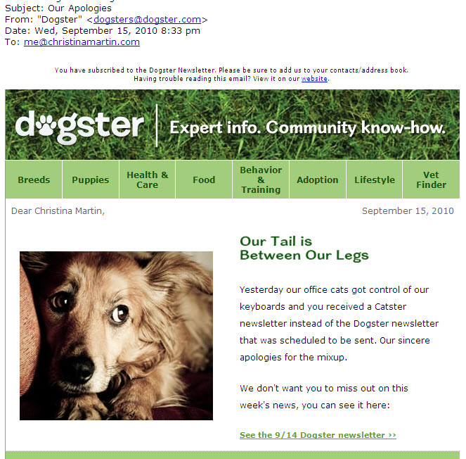 dogsteremail.jpg
