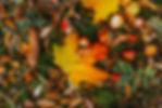 oskar-kadaksoo-J6HDP2zGvpA-unsplash.jpg