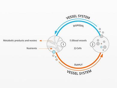 bemer-vessel-system.jpg