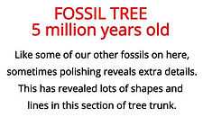 polished tree section from our fossils artefacts box for primary schools