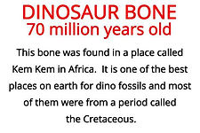 dinosaur bone from our fossils primary resource box