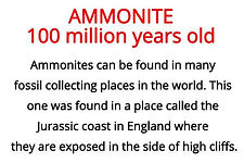 ammonite from our fossils artefacts for primary schools topic box