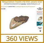 fossils-360-megtooth.jpg