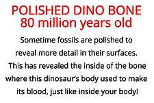 Polished dinosaur bone from primary school fossils box