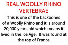 woolly rhino bone from our primary stone age artefacts box for hire