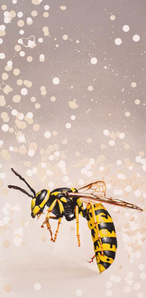 Wasp on Grey