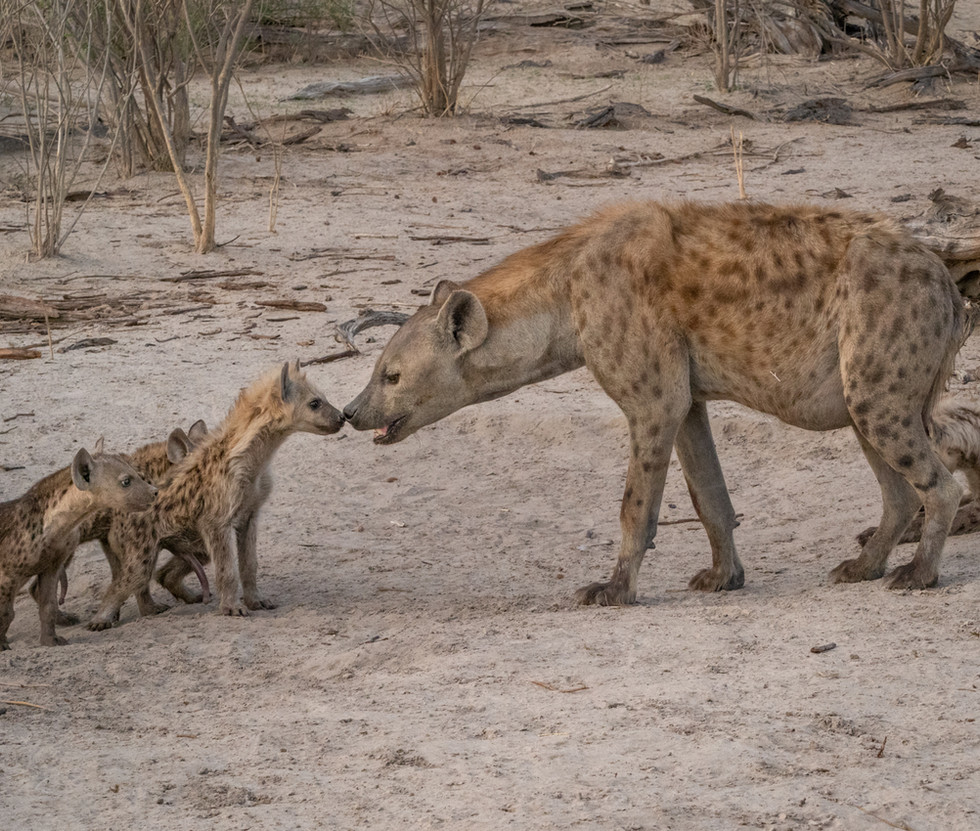 Mother Hyena and Cubs