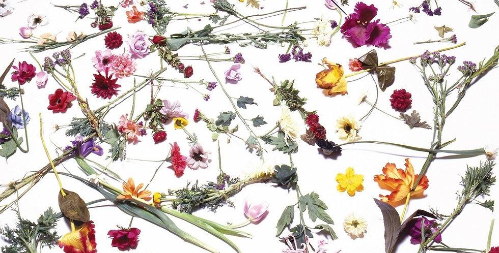 Prince – When Doves Cry (Specially - Priced 2 – Cut Maxi Single) - novo