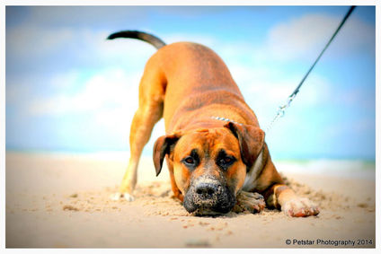 Pet Photographer Adelaide