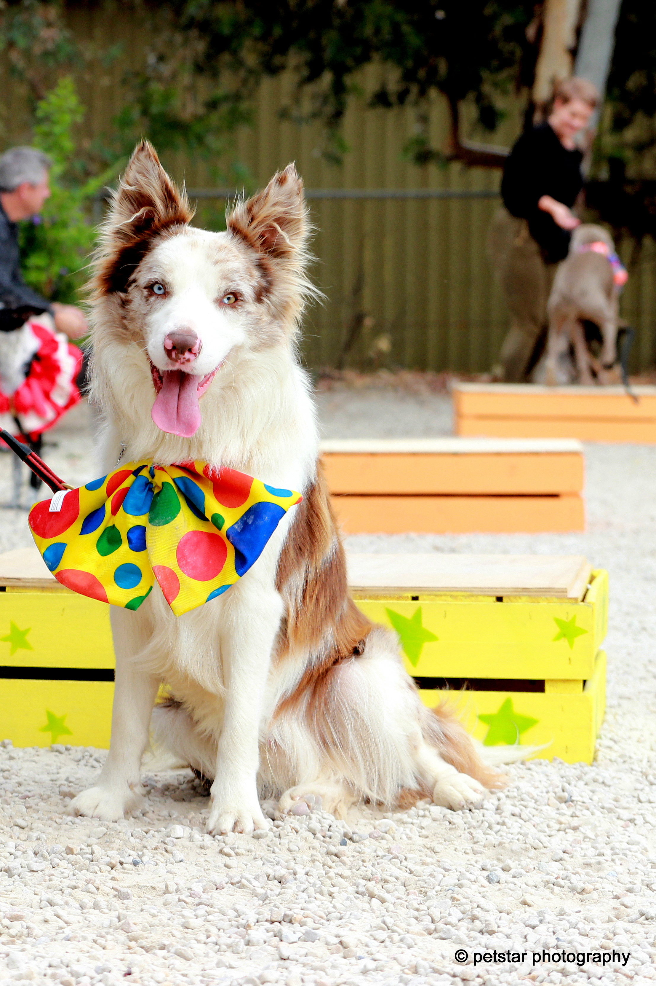 pet events photographer adelaide