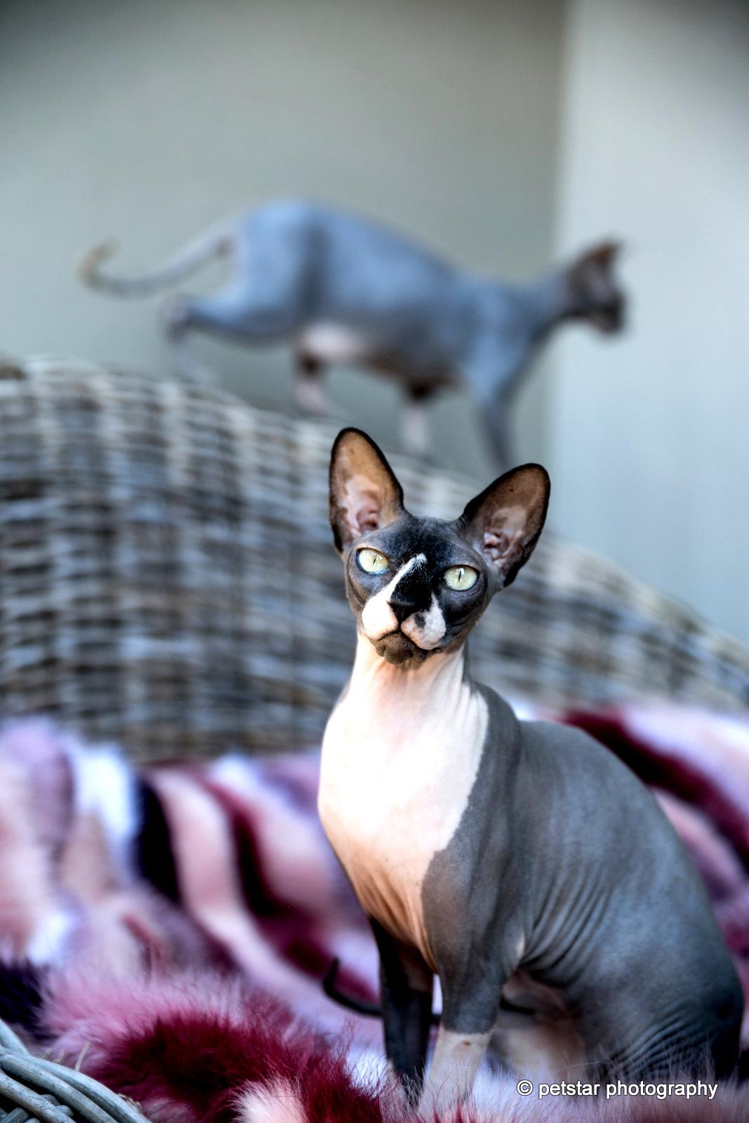 Adelaide Pet Photographer