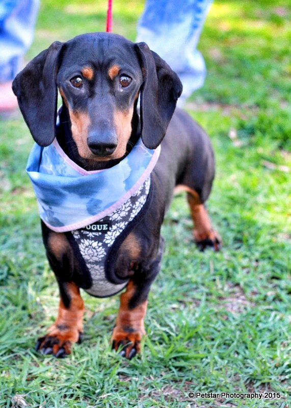 pet events photography adelaide