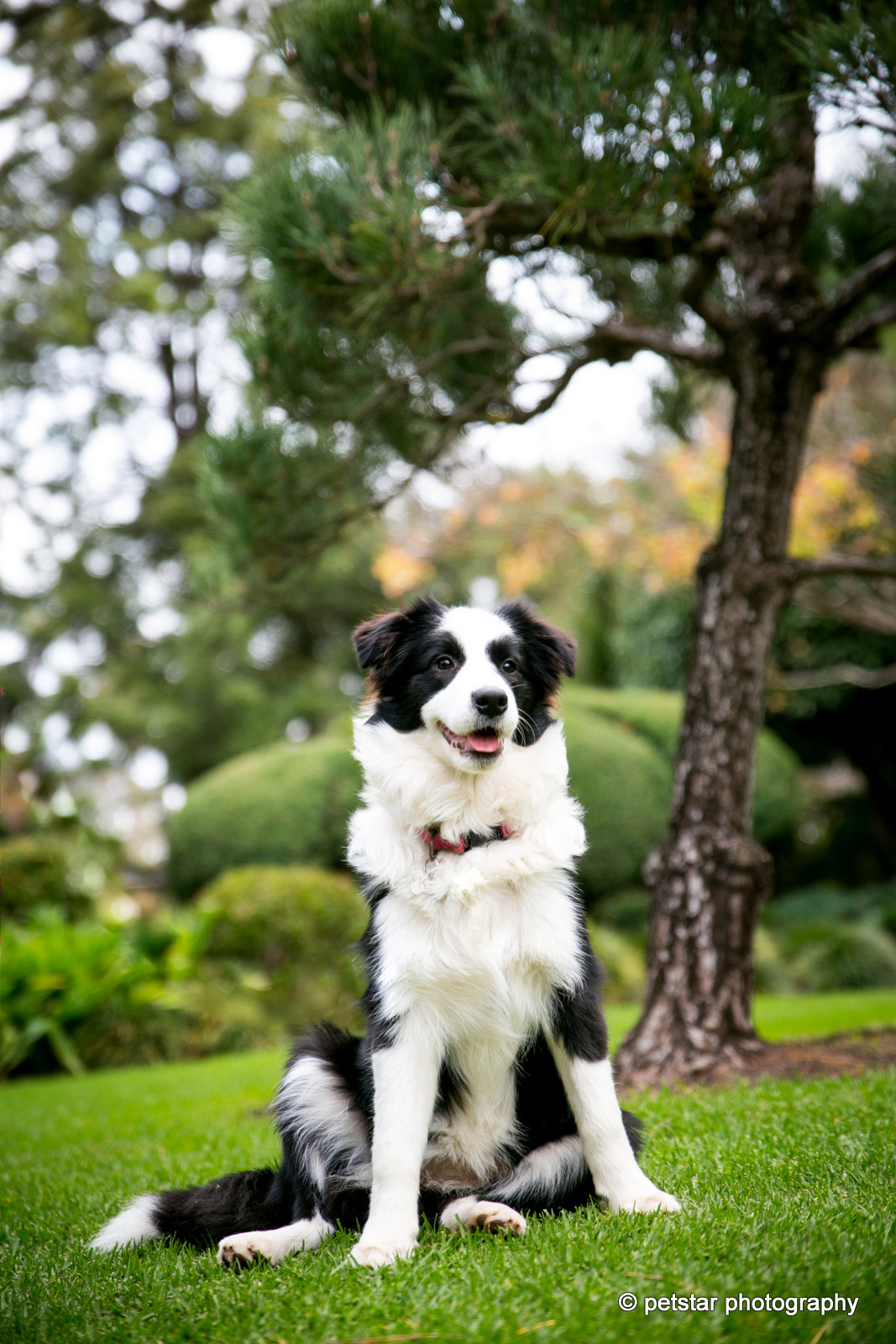 Adelaide Pet Photographer