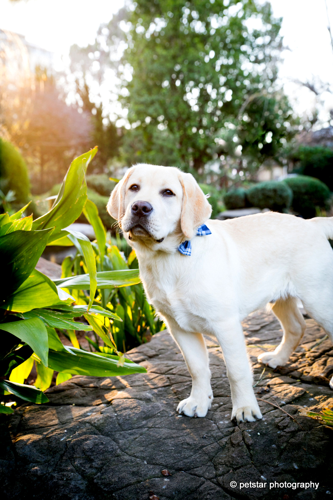 Adelaide Family Pet Photography