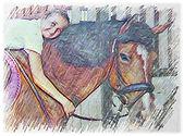 Hannahs Horse Haven.jpg