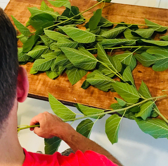 Making Mulberry Leaf Powder Tea at Home