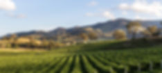 Winery_edited.jpg