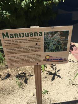 Legalized in Jamaica