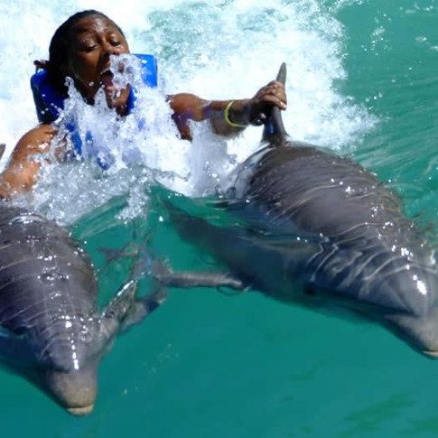 Dolphin Cove Tour