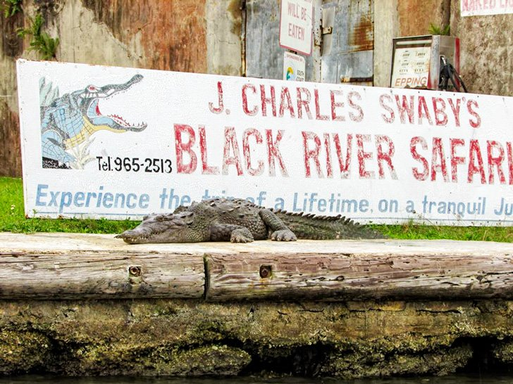 J. Charles Swaby's Black River Safari
