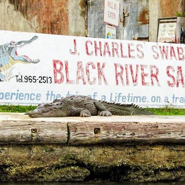 J. Charles Swaby's Black River Safari