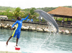 Dolphin Cove Negril Jamaica