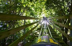 Jamaican Rain Forest Bob Sled Montego Bay , Jamaica