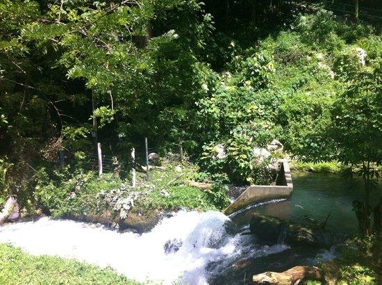 Roaring River Jamaica