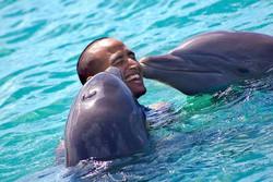 Dolphin Cove Tour