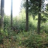 vegetationsgutachten 133.jpg