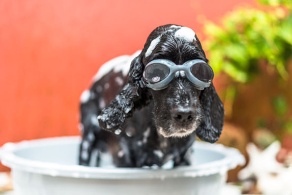 puppy_bath_goggles.jpg