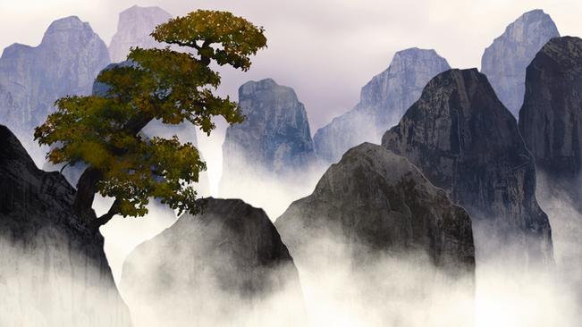 lonely bonsai concept
