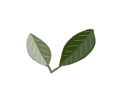 Tina zita plant .png