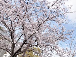 ☆4月お休みのお知らせ☆