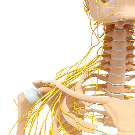 Spinal Physio Trapped Nerve.jpg