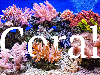 7 coral+project.jpg