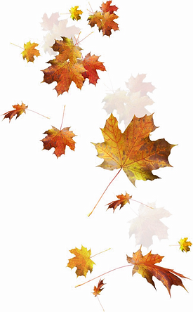 12900_fall-leaves-png (1).png