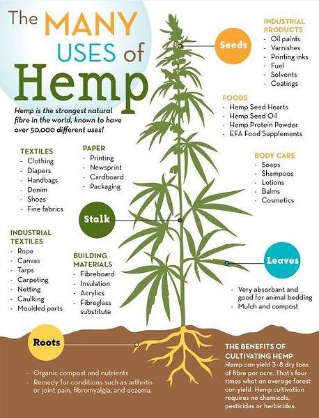 Florida hemp CBD florirda marijuana regulate the happy hemp