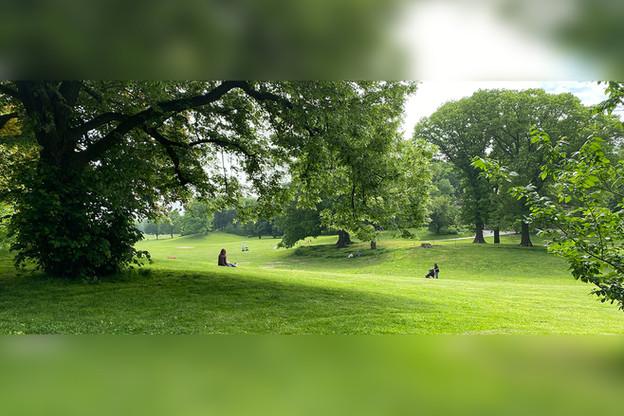 long meadow.jpg