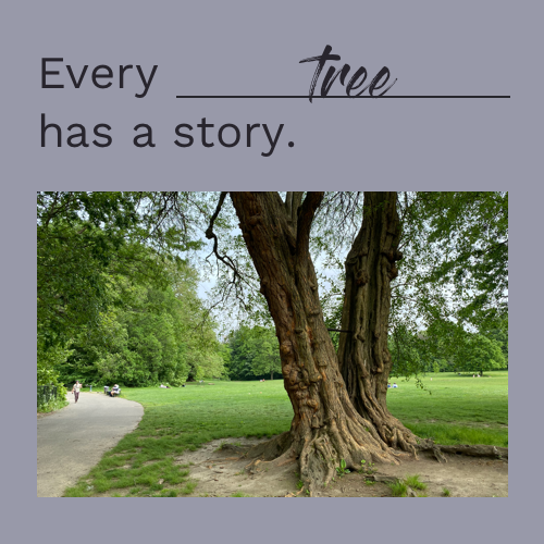 Every___has a story.png